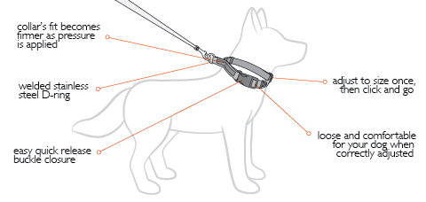Checkmate Dog Training Collars