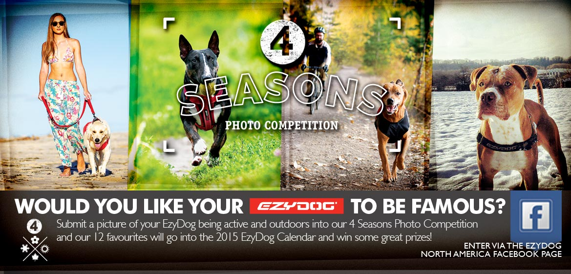 4 Seasons Photo Competition