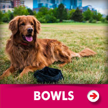 Dog Bowls Category Picture