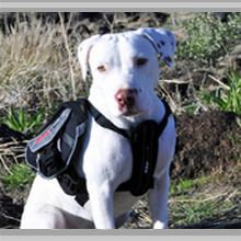 Large dog backpacks category picture