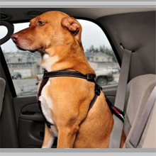 Large dog car restraints category picture