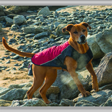 Large Dogs Apparel Category Image