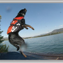 Large dog life jackets category picture