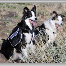 Medium dog backpacks category picture