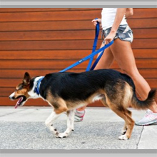 Medium dog leashes category picture