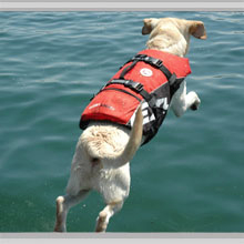 Medium dog life jackets category picture