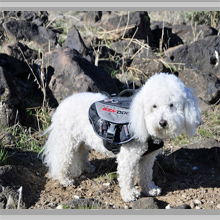 Small dog backpacks category picture