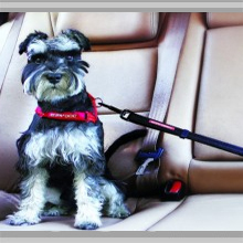 Small dog car restraints category picture