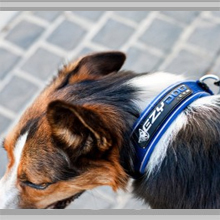 Small dog collars category picture