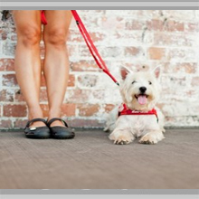 Small dog leashes category picture