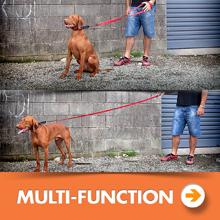 EzyDog Multi-Function Leash Category Image
