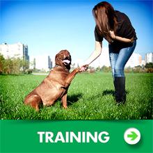EzyDog Training Dog Leash Category Image
